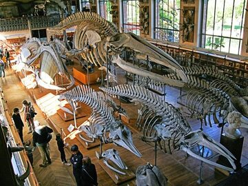 Najbardziej niesamowite muzeum na Ziemi. Historia świata w jednym budynku