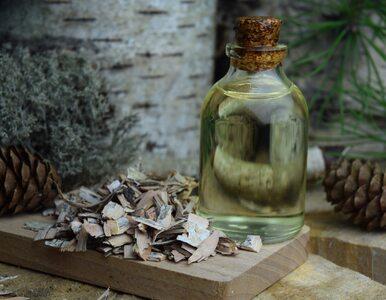 Betulina – substancja z kory brzozy, która ma niezwykłe działanie