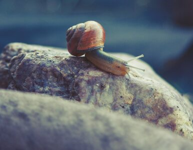 Nietypowe znalezisko w muszli ślimaka. 40-latek przez przypadek znacznie...