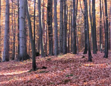 3,3 mld złotych - wartość rekreacji jaką daje nam las