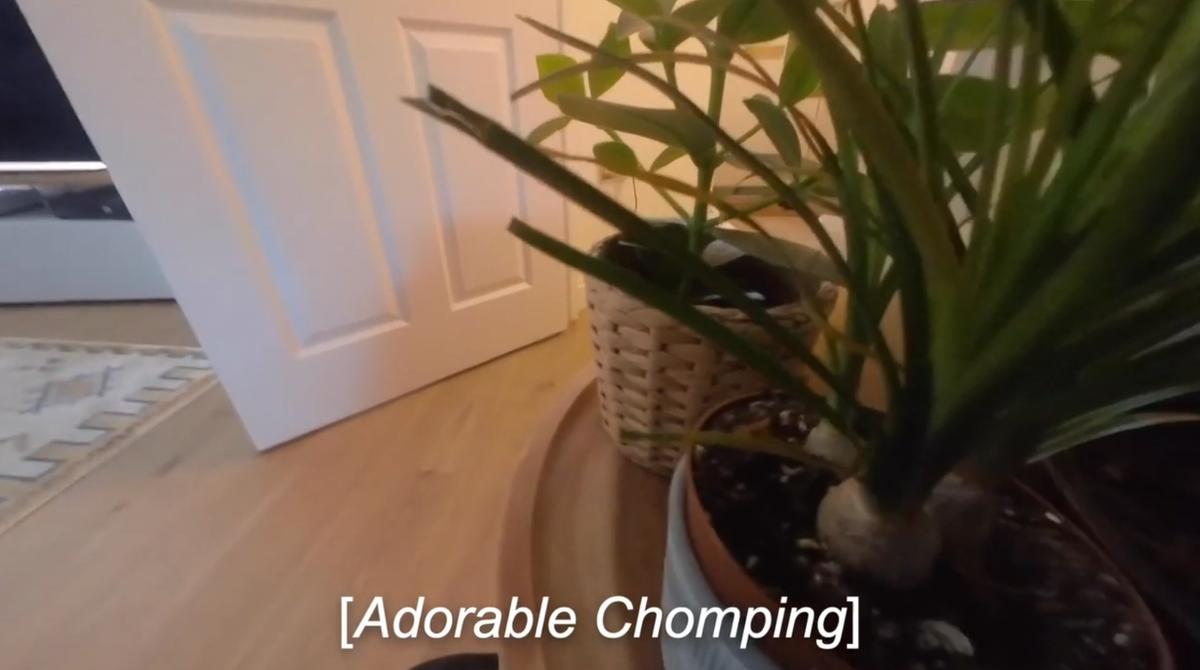 Widok z kamery noszonej przez kota Ralpha
