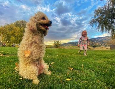 """Pies bez dwóch łap uczy chodzić dziecko. """"Jest najszczęśliwsza na świecie"""""""