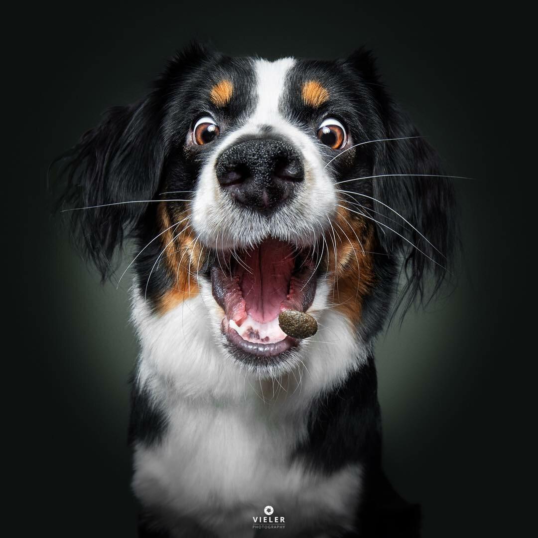Pies łapiący jedzenie w powietrzu