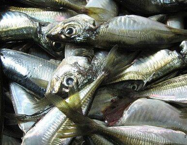 Zatruli wodę. 5 ton ryb zdechło - cała populacja 8 gatunków