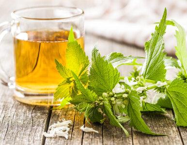 Czy herbata z pokrzywy to cudowny środek na zdrowe włosy i paznokcie?...