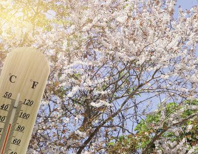 Niedziela pogodna i ciepła w całym kraju. Temperatura sięgnie 24 stopni