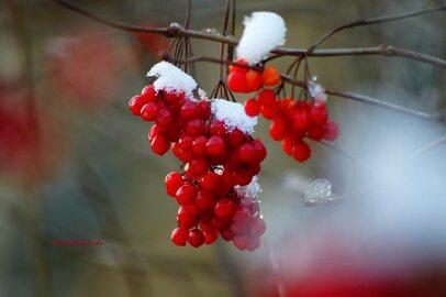 Zima wraca