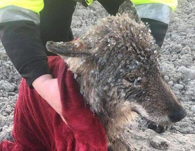 """Uratowali """"psa"""" z lodowej pułapki. Gdy odkryli, z czym mają do..."""