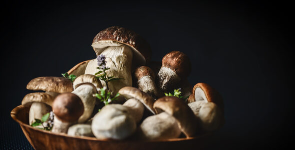 Quiz dla znawców grzybów