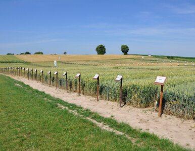 Czy dystrybutorzy środków do produkcji rolnej obawiają się suszy?