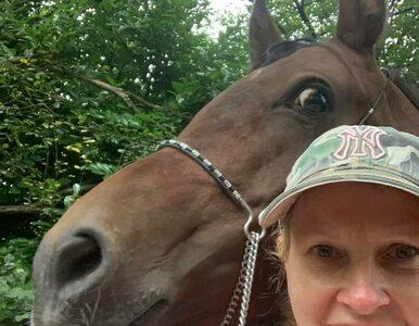 Podejrzewano ją o terroryzm. Wszystko przez przelew na szkolenie... konia