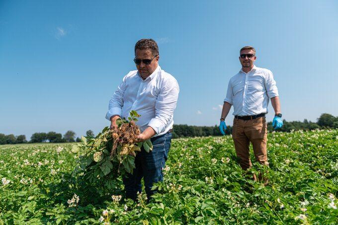 Frytki Farm Frites dlarestauracji McDonald's powstają zespecjalnych odmian ziemniaków