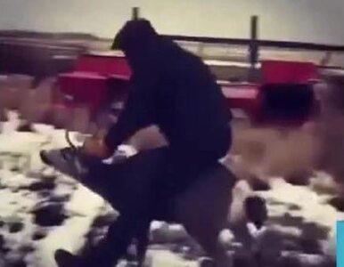 18-latek ujeżdżał dzikiego jelenia, a nagranie umieścił w internecie....