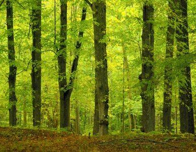 Lasy Państwowe wydadzą 700 mln zł. Większość  na drogi