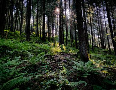 Nocowanie w lesie ma być łatwiejsze. Lasy Państwowe robią ukłon w...