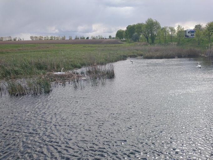 Tworzone zalewy stają się siedliskiem ptactwa wodnego