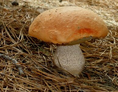 Odnaleziono zaginionego grzybiarza