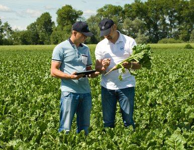 Krajowa Spółka Cukrowa: odpowiedzialny i efektywny biznes