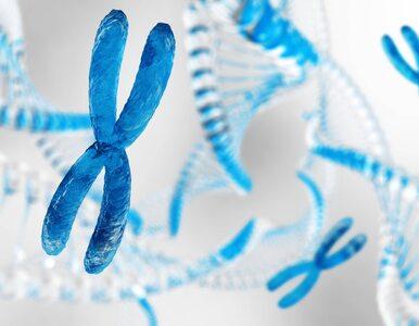 W jaki sposób krzyżują się geny? Udało się rozwikłać 100-letnią zagadkę