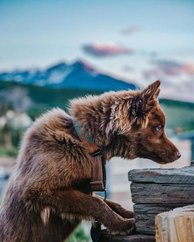 Husky Quoi