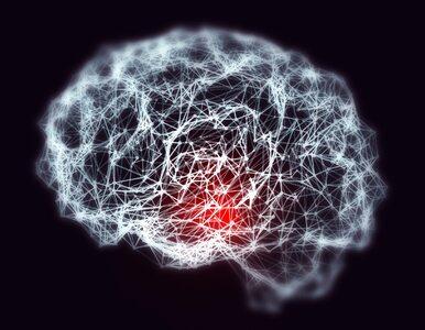 Układ nerwowy – autopilot człowieka. Najbardziej skomplikowany element...