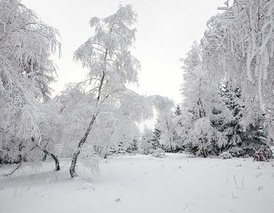 Warszawa pod śniegiem
