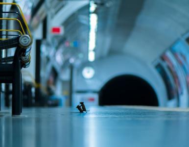 Brutalna walka myszy na stacji metra. Oto 5 najlepszych zdjęć z konkursu...