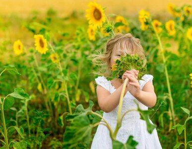 Co pyli w lipcu? Letni kalendarz (nie tylko) dla alergików