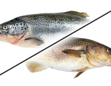 Mięso ryb staje się coraz bardziej toksyczne. Dlaczego?
