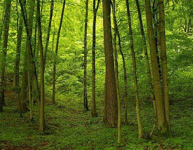 Milion podpisów przeciw prywatyzacji lasów