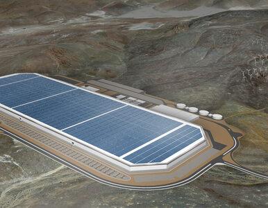 Elon Musk zapowiedział ogromną inwestycję? Zrobił to w swoim stylu