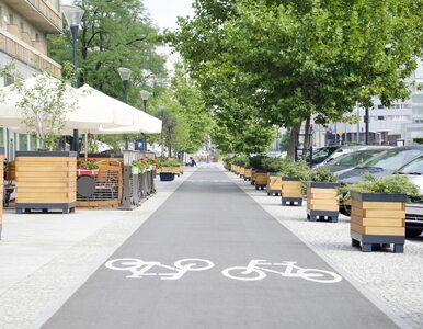 Miasta potrzebują drzew. To najcenniejszy element zieleni miejskiej