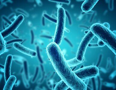 Czym są bakterie? Ciało człowieka zawiera ich nawet... 2 kilogramy