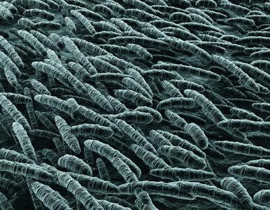 Czym są drobnoustroje? Spotykamy je w wodzie, glebie i ludzkim organizmie