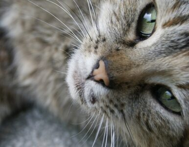 Czy prawa zwierząt są w Polsce przestrzegane?