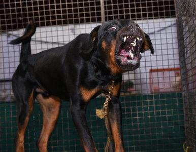 Koszmarna śmierć w Nowej Soli. Psy pilnujące firmy rozszarpały człowieka
