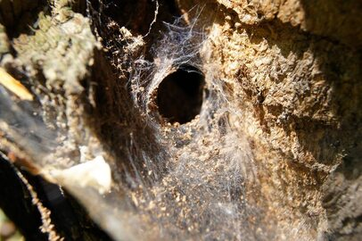Niezwykły świat pająków