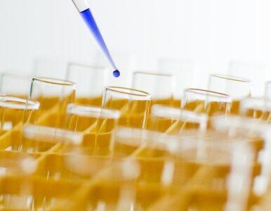 Naukowcy przeszczepią komórki dzieci z aborcji