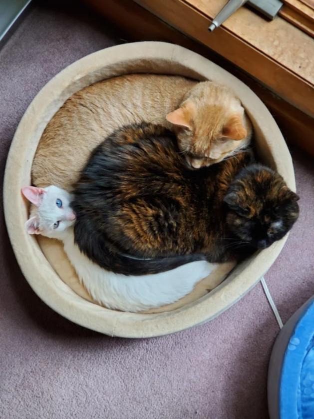 Trzy koty w jednym posłaniu