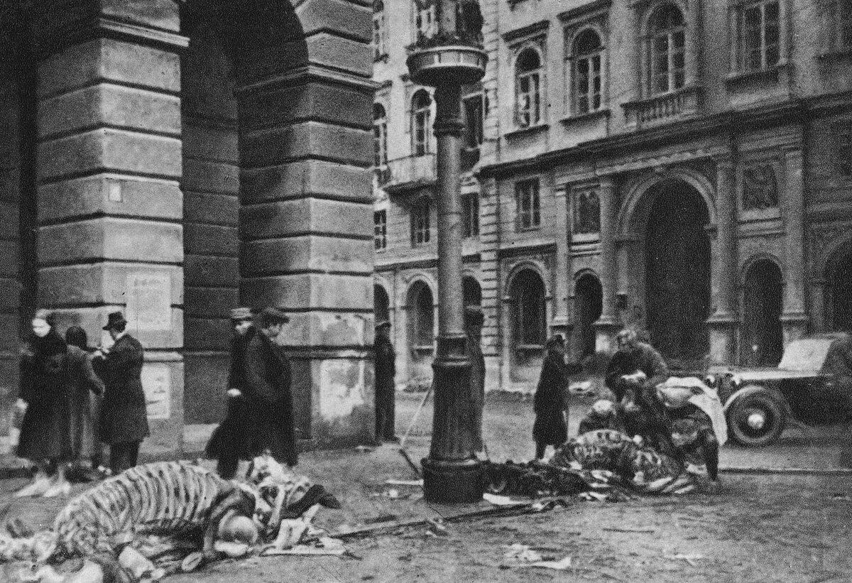 Okolice Pałacu Staszica przy Nowym Świecie. Widoczne są końskie szkielety. W obliczu walk i problemów zaopatrzeniowych żadne mięso nie mogło się zmarnować, także zabitych koni...