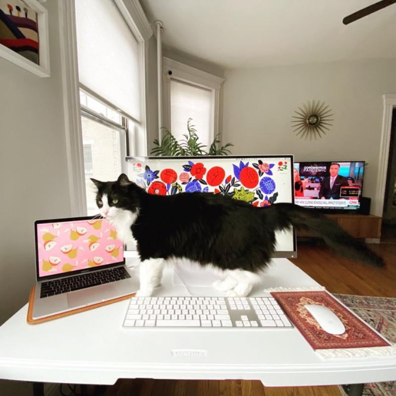 """""""Nieźle, ale mój współpracownik chodzi po klawiaturze"""""""