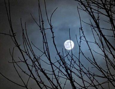 Niezwykłe zjawisko na niebie. Zobacz, jak wyglądał Śnieżny Księżyc