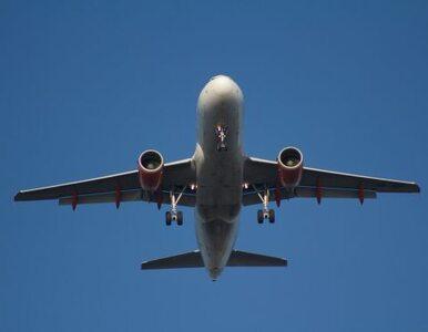 Opóźnienia samolotów na polskim lotnisku z powodu... zderzenia z ptakiem
