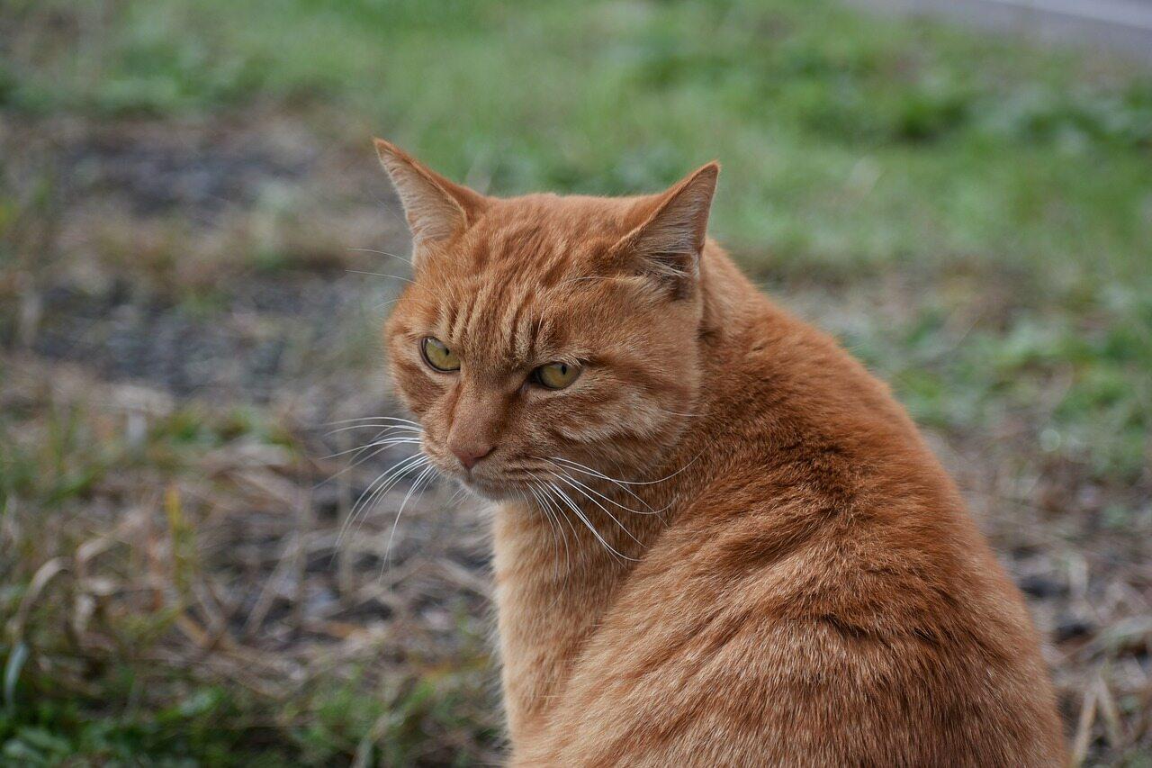 Co według powiedzenia można zrobić z kotem?