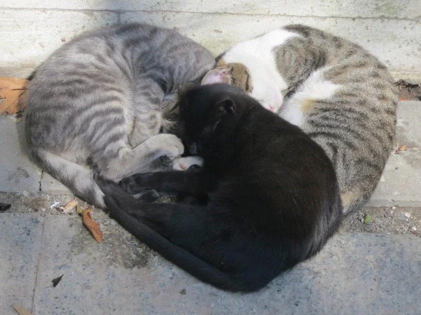 Koty ułożyły się w kształt serca