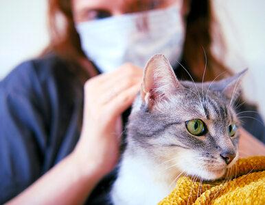 Koty najczęściej zarażają się COVID-19, jeśli sypiają w łóżku właściciela