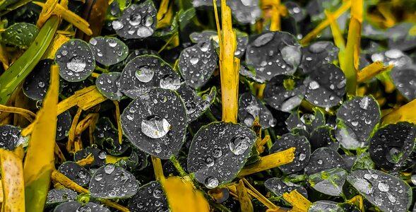 Przysłowia pogodowe - tylko na kwiecień