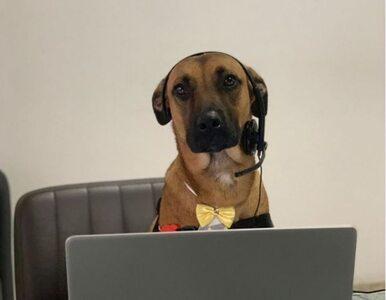 Bezpański pies często odwiedzał salon Hyundai. W końcu dostał tam pracę...