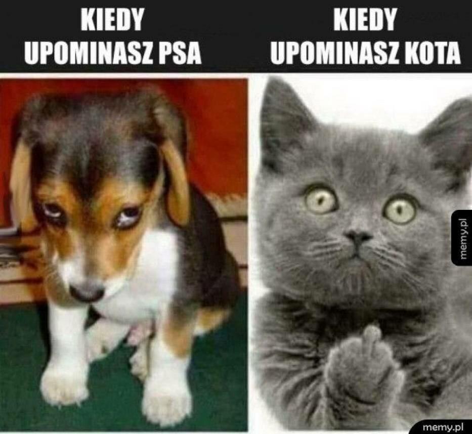 Memy z psem i kotem w roli głównej