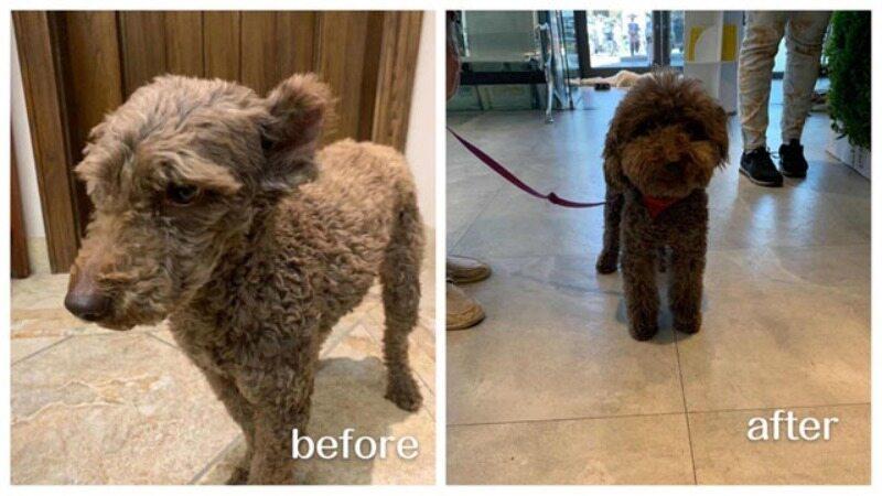 Przed i po adopcji